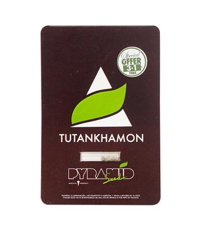 Семена сорта Tutankhamon fem (Pyramid Seeds)