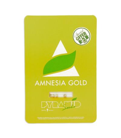Семена сорта Amnesia Gold fem (Pyramid Seeds)