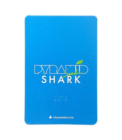 Семена сорта Shark fem (Pyramid Seeds)