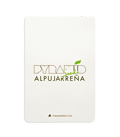 Семена сорта Alpujarrena fem (Pyramid Seeds)